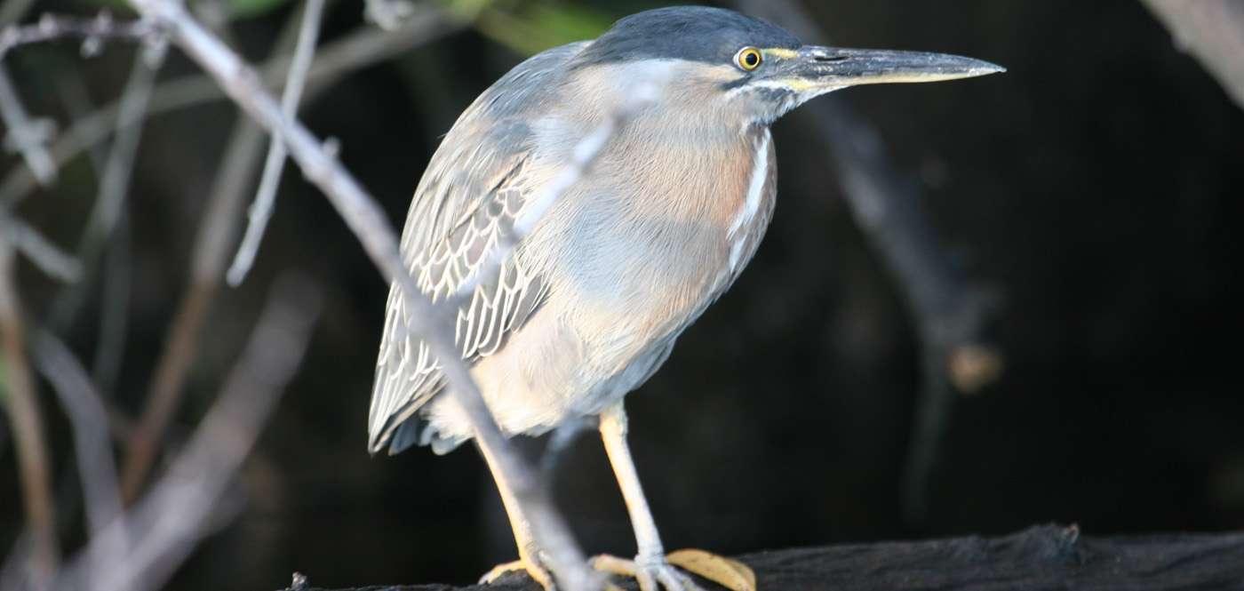 Bird at Galapagos Islands