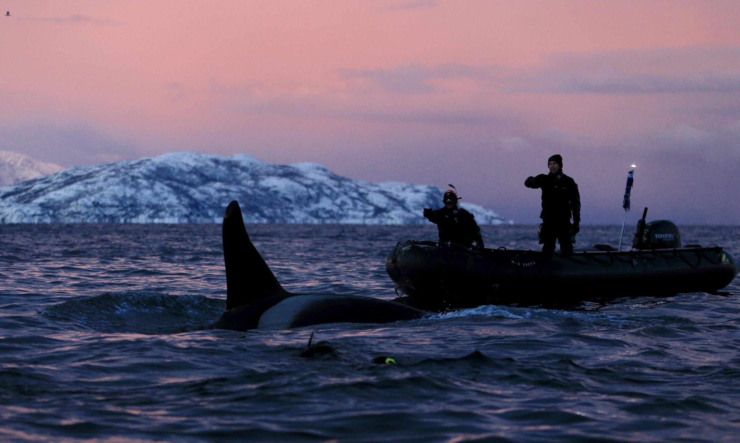 Orca Norway - Li Jun