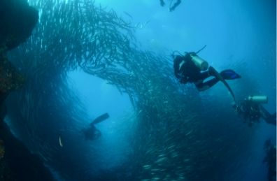 Diving live-aboard Galapagos