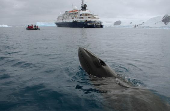 Last Minutes Antarctica: 15% discount on last available suites