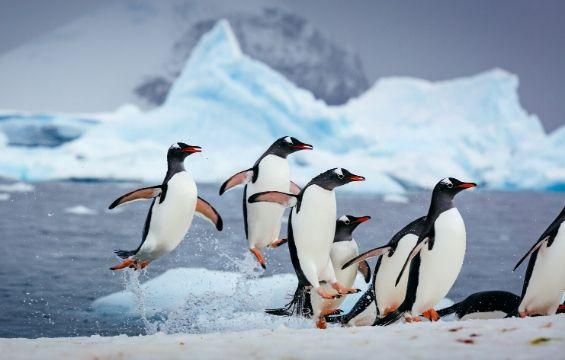 Sale: Up to 50% discount on Antarctica