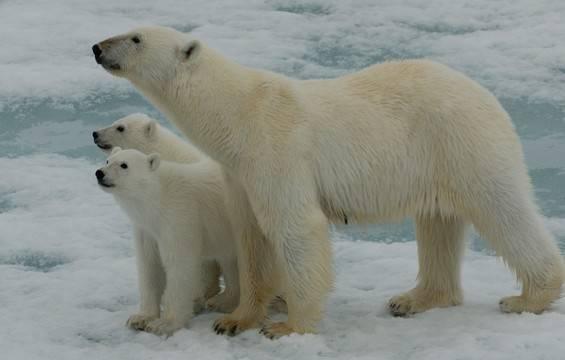 Aanbiedingen Noord Spitsbergen 2020