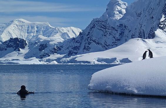Diving & Snorkeling Antarctica