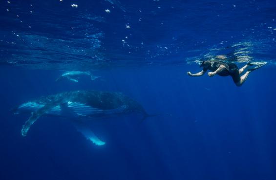 Snorkeling activity